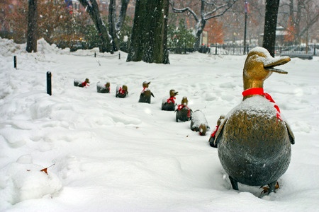37046700_S_--_Make_Way_for_Ducklings.jpg