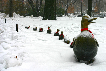 42908756_S -- Make way for ducklings winter