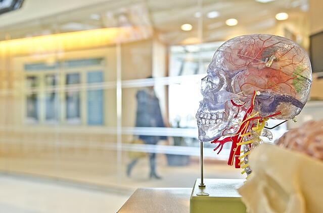 Stock photo image of transparent human brain.