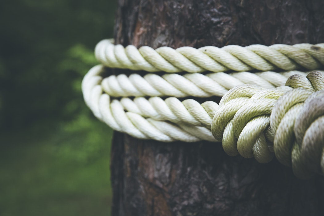Photo of rope tied around a tree.